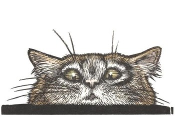 Peeping tom cat