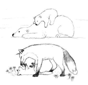 Sketches of cubs