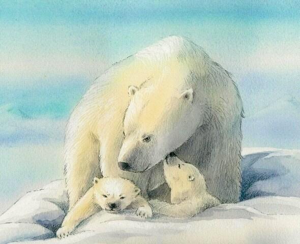 Small Wonders - Polar Bear